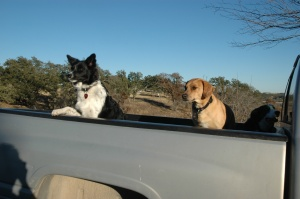 Bella on the left. Jack refuses to get out the pickup, instead demanding to ride up the hill.