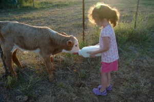 Granddaughter Ramsey bottle feeding a calf