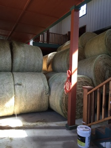 Hay is (mostly) in the Barn