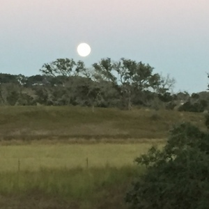 Super Moon Hovers Over Medicine Spirit Ranch